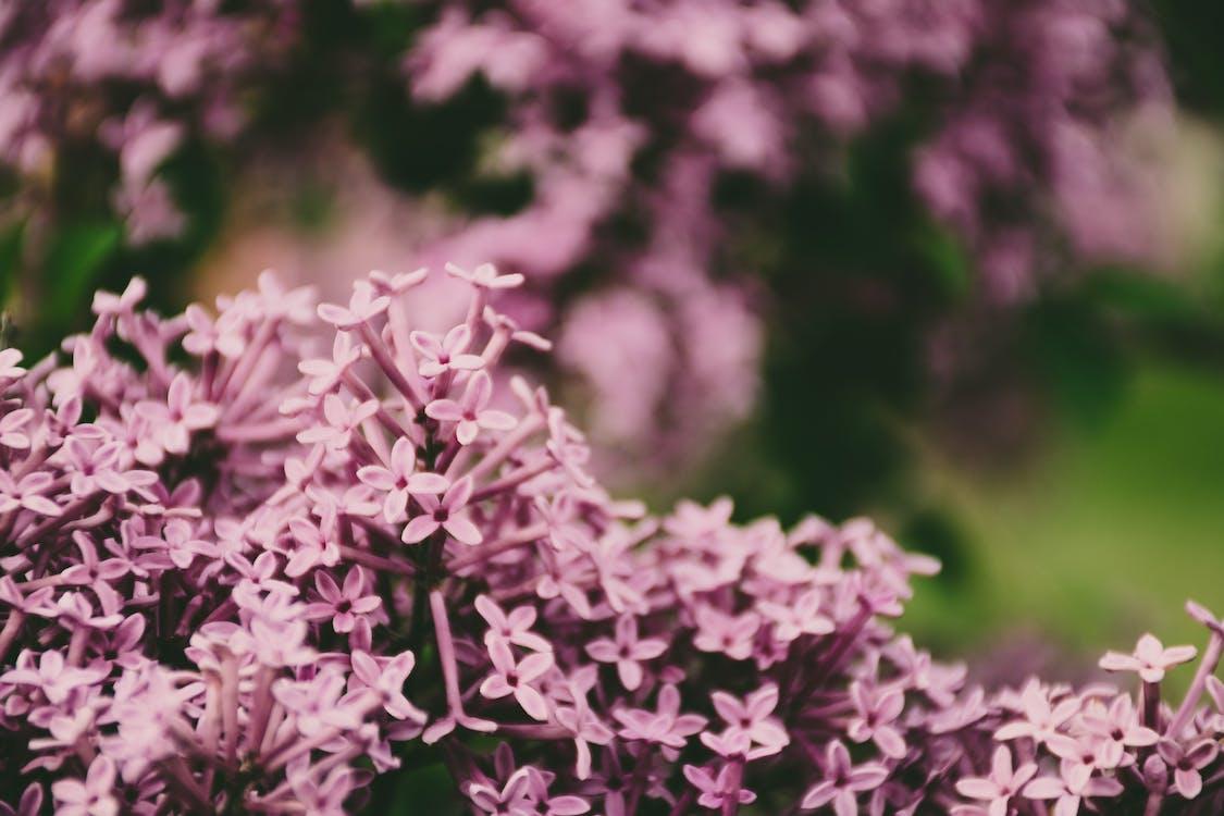 blad, blomma, blomning