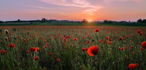 Δωρεάν στοκ φωτογραφιών με γήπεδο, ήλιος, καλλιεργήσιμη γη, λουλούδι