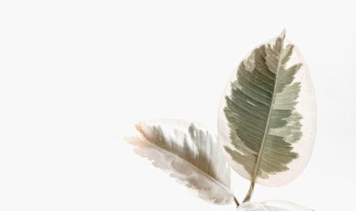 Darmowe zdjęcie z galerii z białe tło, jasny, lato, liście