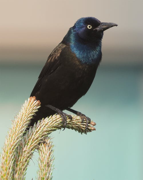 Immagine gratuita di #uccelli, #uccello, #wildlife