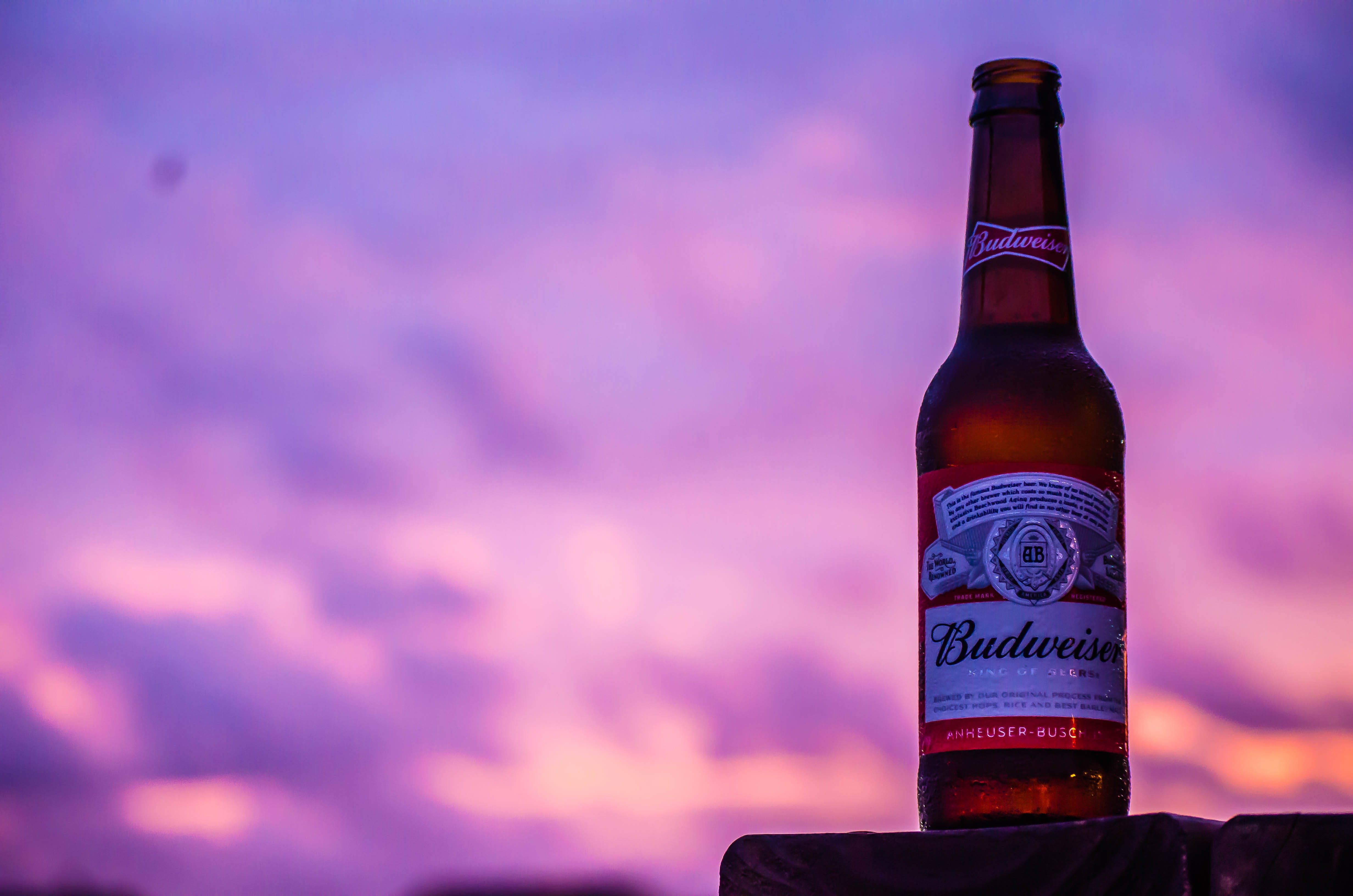 Free stock photo of beer bottle