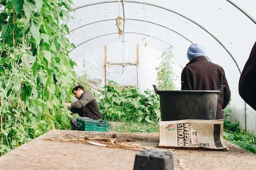 下田, 人, 修剪花草, 农民 的 免费素材照片