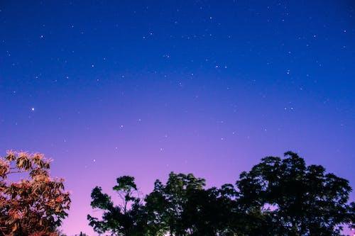 คลังภาพถ่ายฟรี ของ ดวงดาว, ต้นไม้, เวลากลางคืน