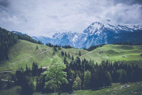 Immagine gratuita di alberi, catena montuosa, freddo, montagne