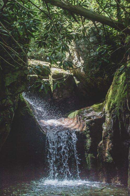 Imagine de stoc gratuită din apă, apă curgătoare, arbori, cascade