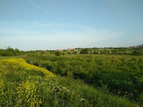 Бесплатное стоковое фото с поле, цветы