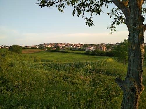 房子, 田, 綠色的田野, 鄉間別墅 的 免费素材照片