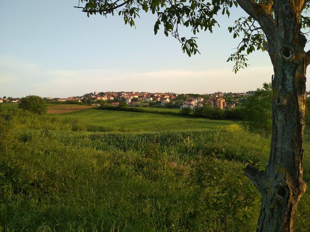 дома, Загородный дом, зеленое поле