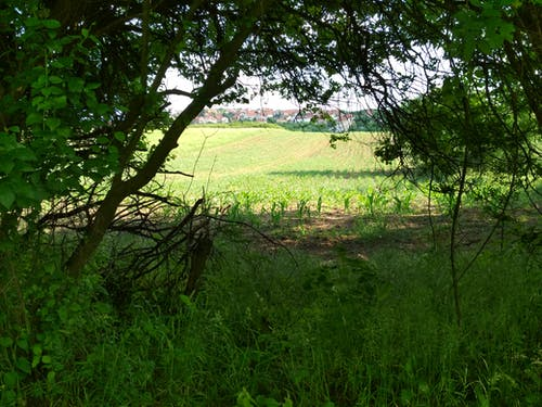 樹, 田 的 免费素材照片