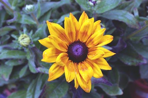大自然, 天性, 漂亮, 美麗的花 的 免費圖庫相片
