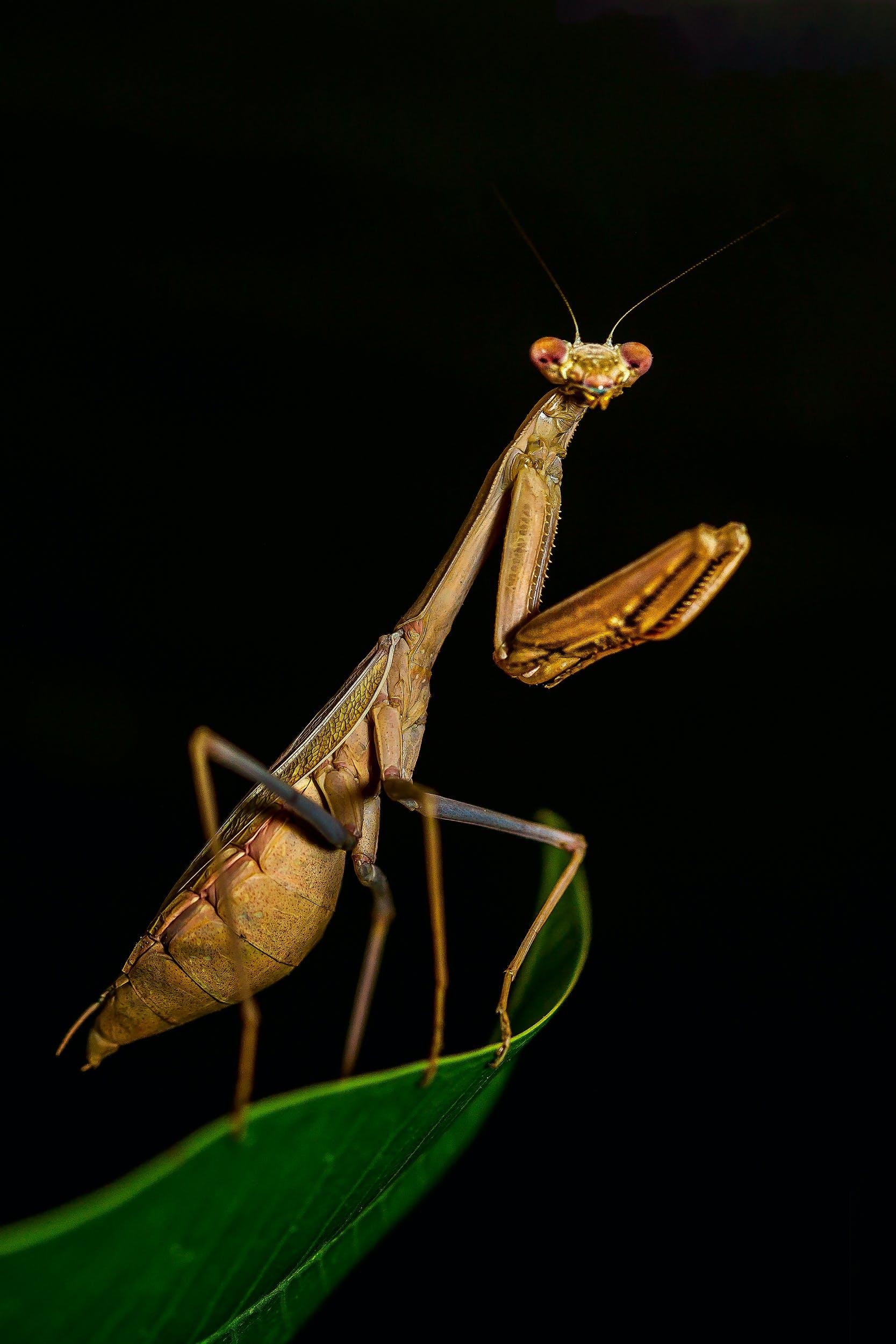 Kostenloses Stock Foto zu blatt, insekt, grashüpfer, gruselig