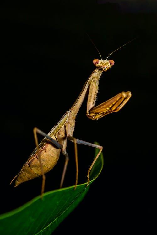 Бесплатное стоковое фото с антенна, жуткий, кузнечик, лист