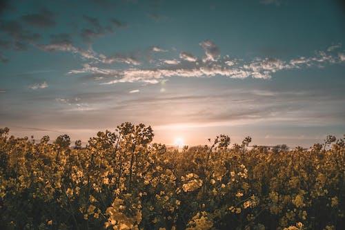Fotos de stock gratuitas de campo, cielo, east sussex, flor
