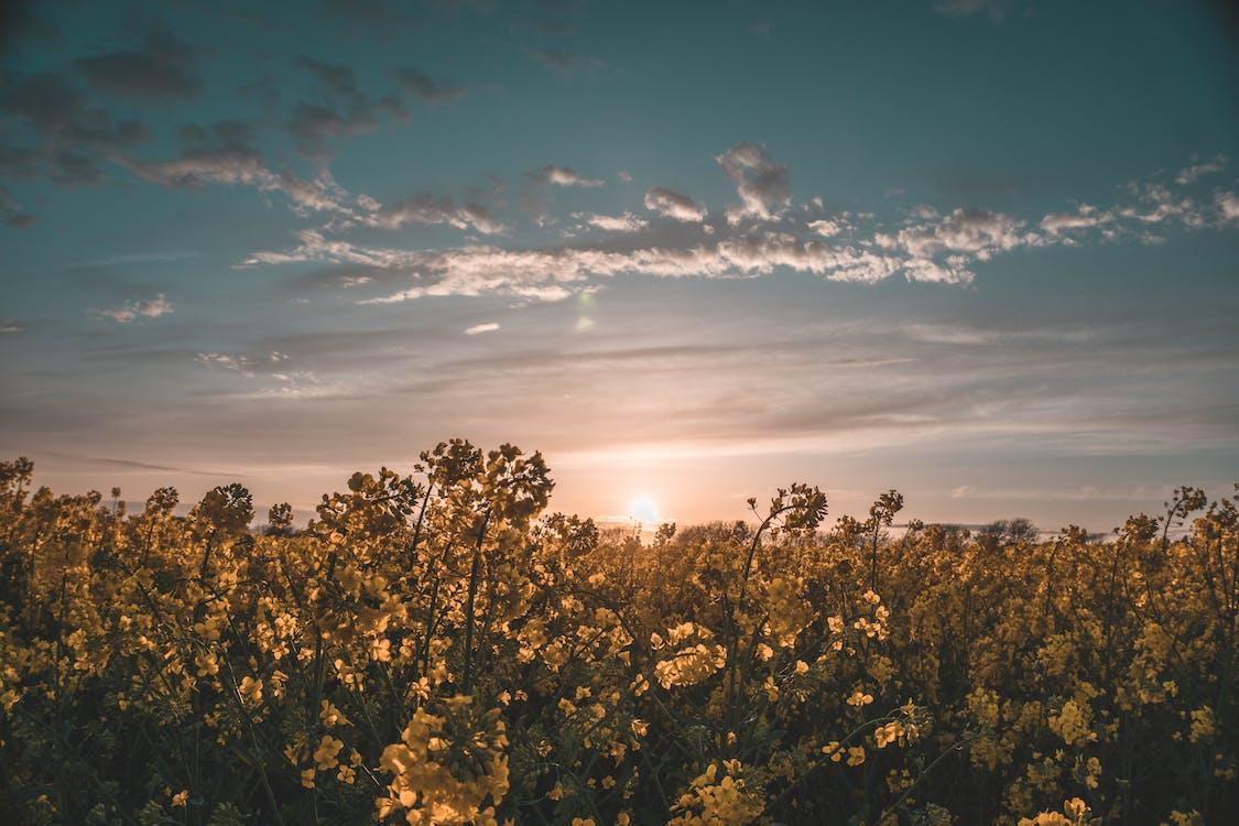 Gratis lagerfoto af bane, blomster, dagslys