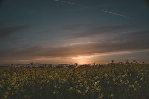 Fotos de stock gratuitas de amanecer, campo, cielo, flor