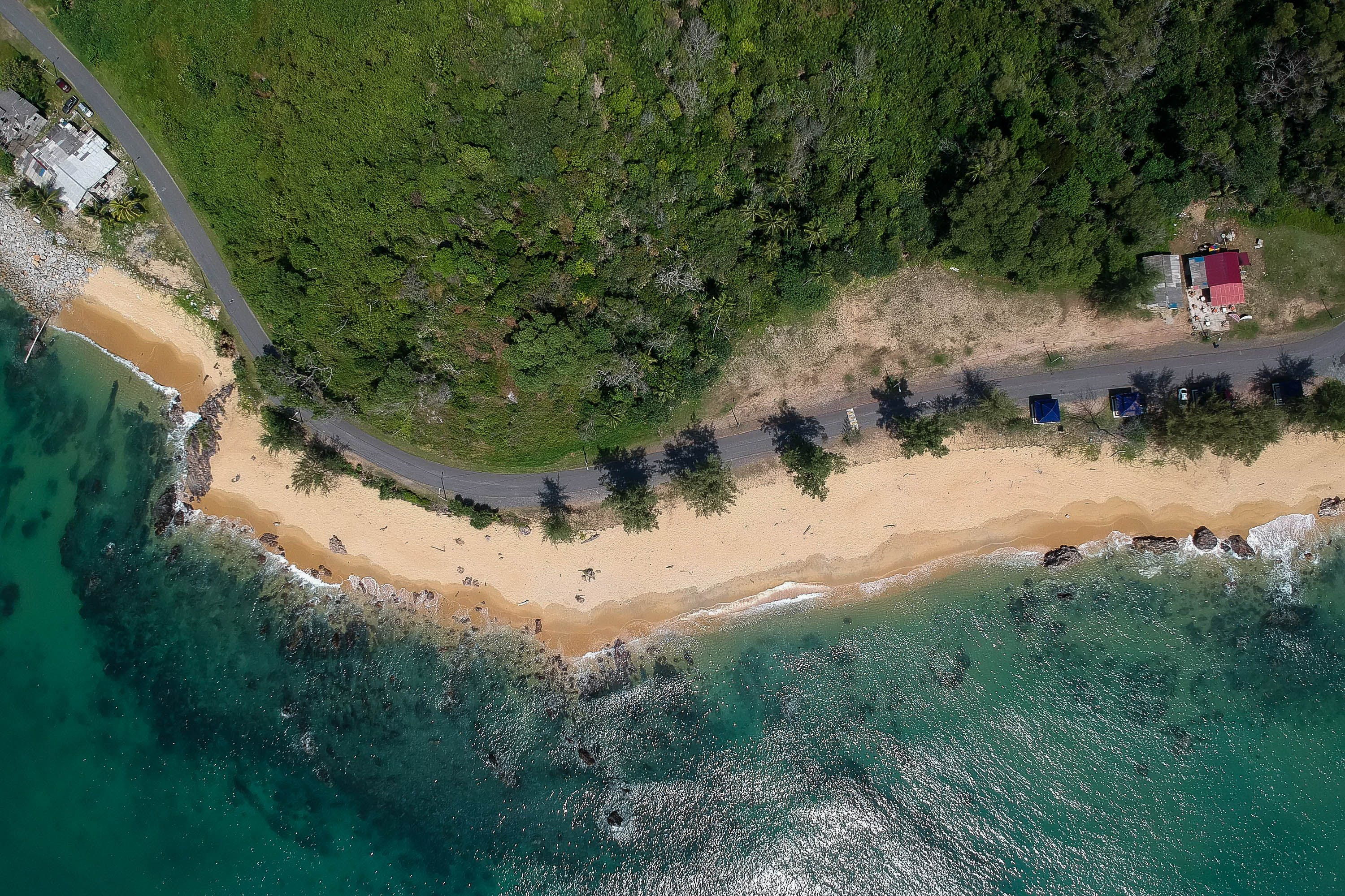 Aerial View of Ocean and Trees