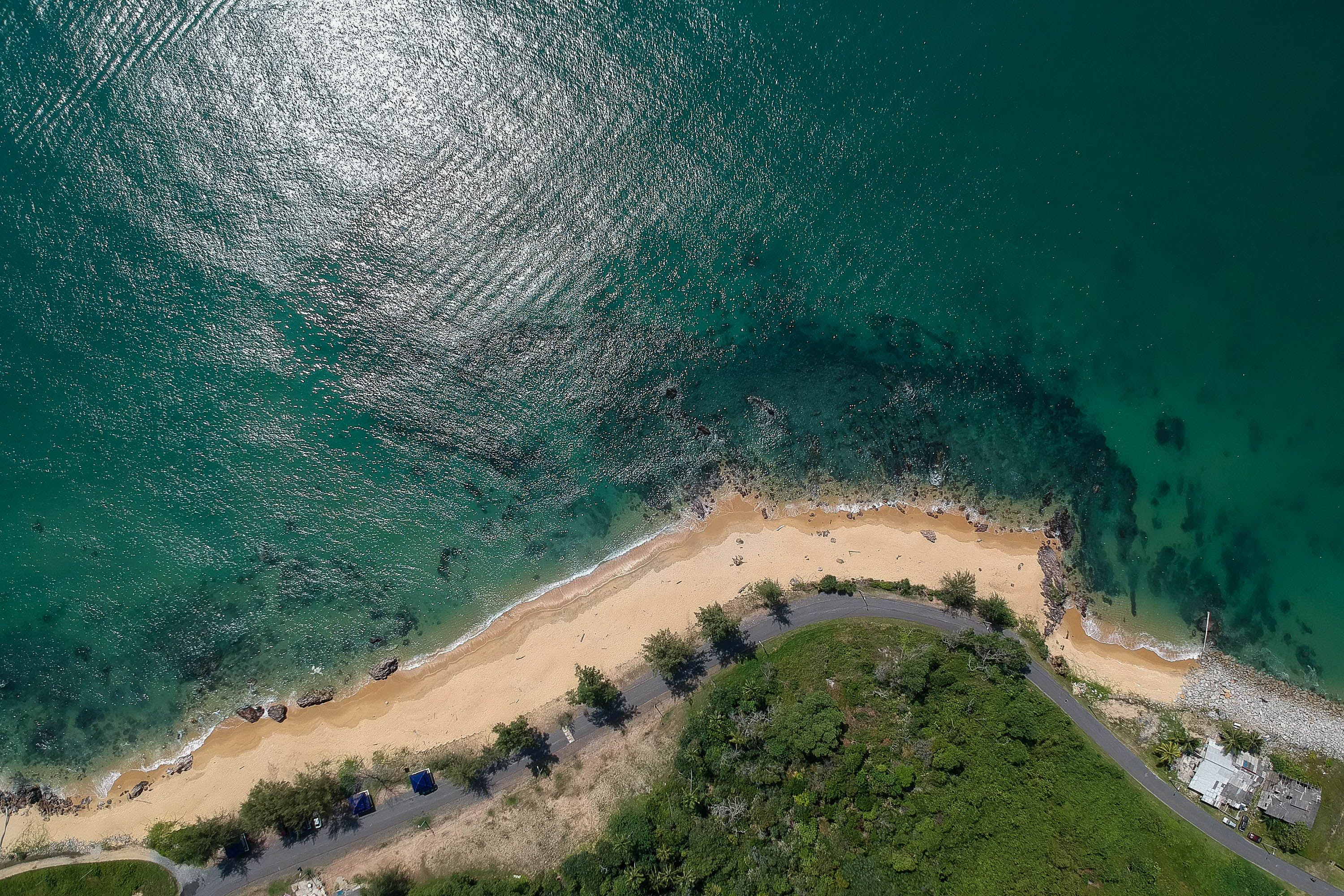 Aerial Photography of Green Trees in Front of Body of Water