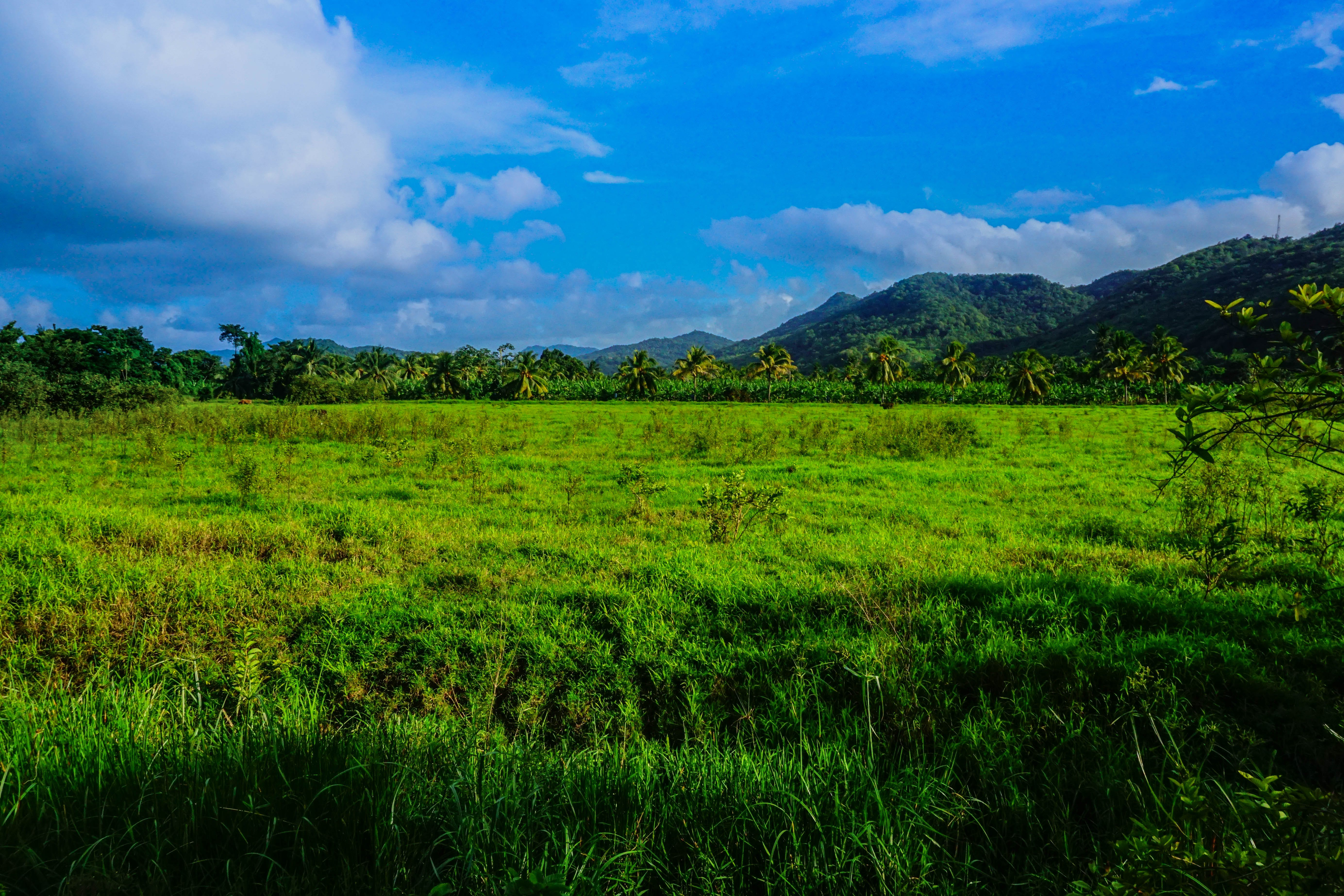 Free stock photo of carribean, nature, open field, plantation