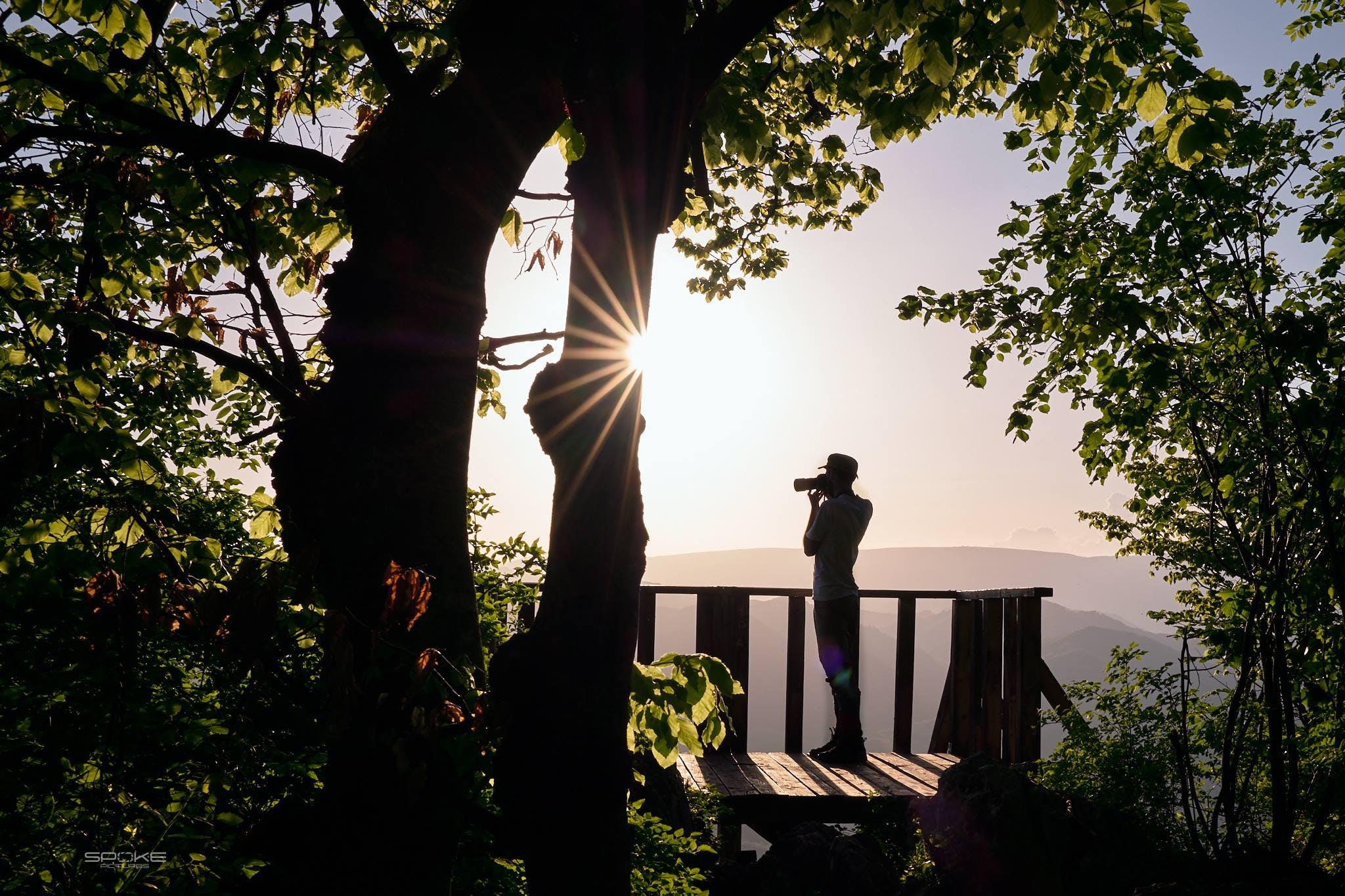 Kostenloses Stock Foto zu bäume, blätter, dämmerung, draußen