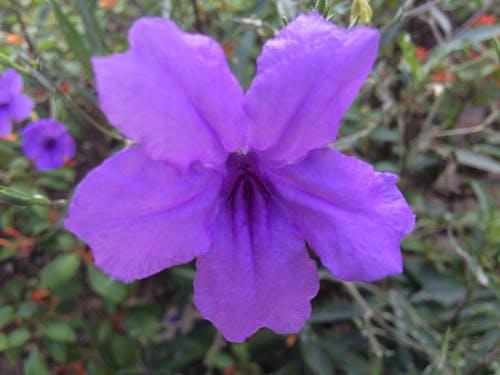 Free stock photo of #flower, Bangkok, fresh flowers, purple
