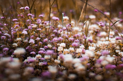 Selective Focus Photography of Purple and White Bed of Flowers