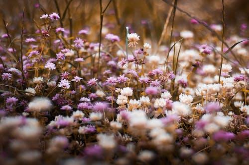 계절, 공원, 꽃, 꽃이 피는의 무료 스톡 사진