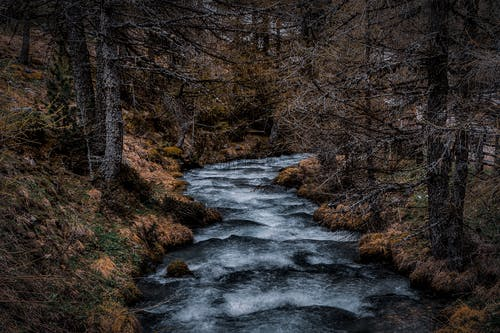 Corpo D'água Entre árvores Altas