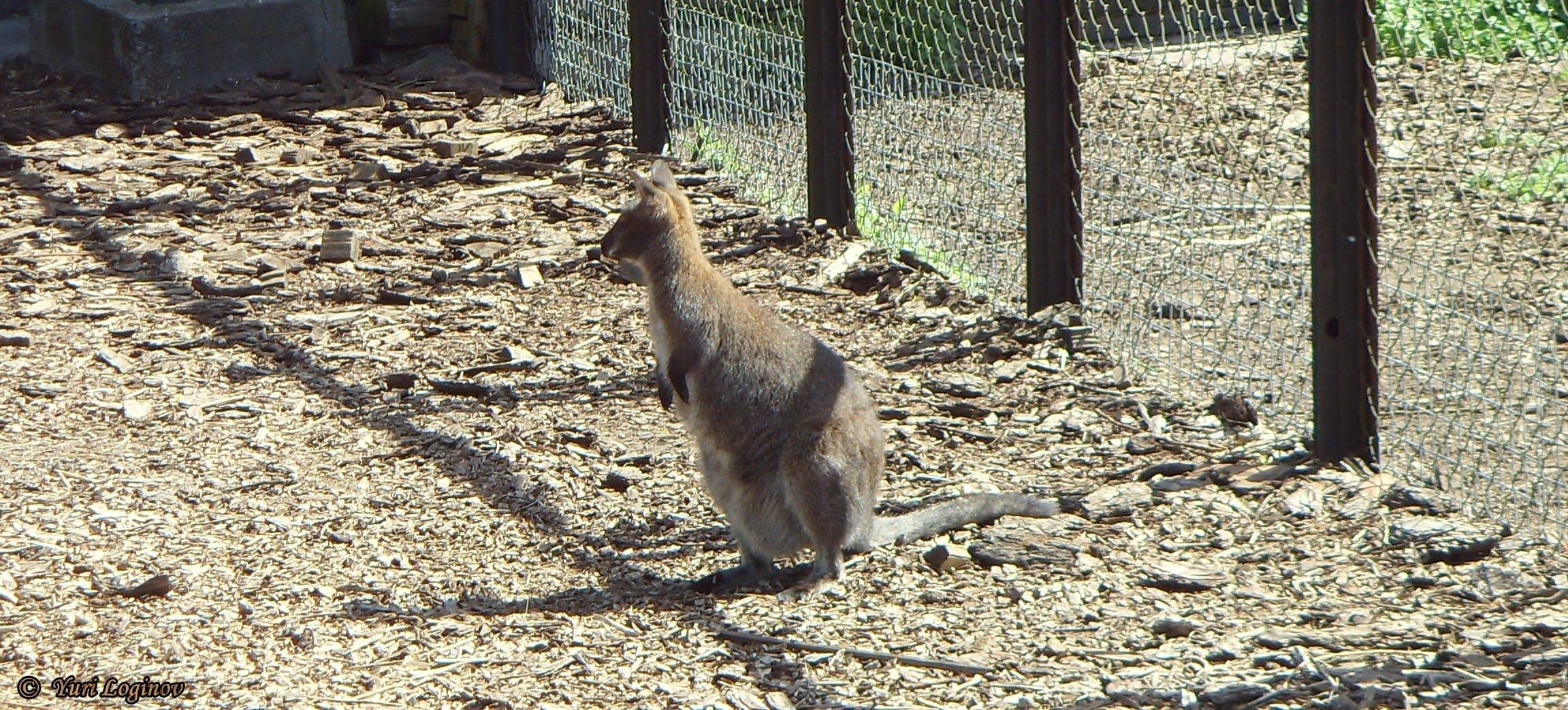 Free stock photo of russia, Kaliningrad, Kaliningrad zoo