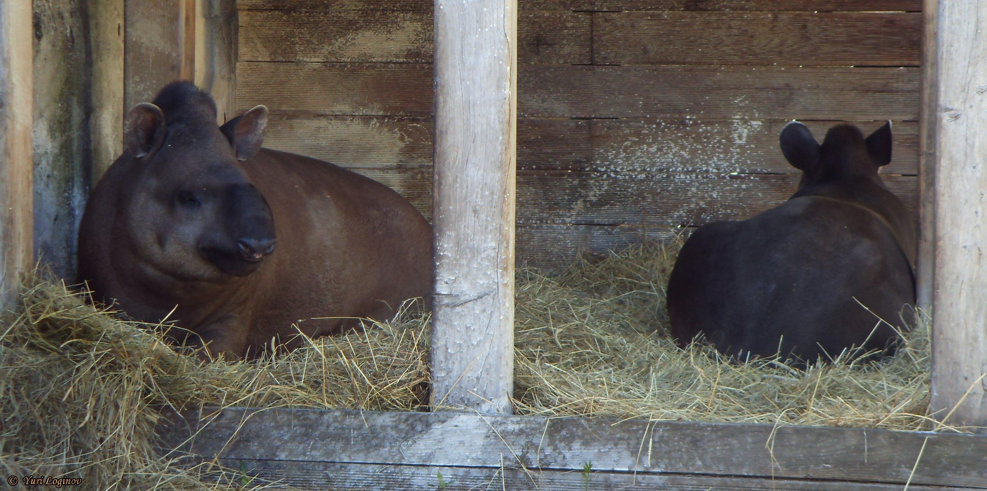 Free stock photo of Kaliningrad, Kaliningrad zoo, russia