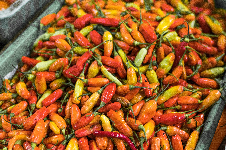 cayennepfeffer, chili, chilischoten