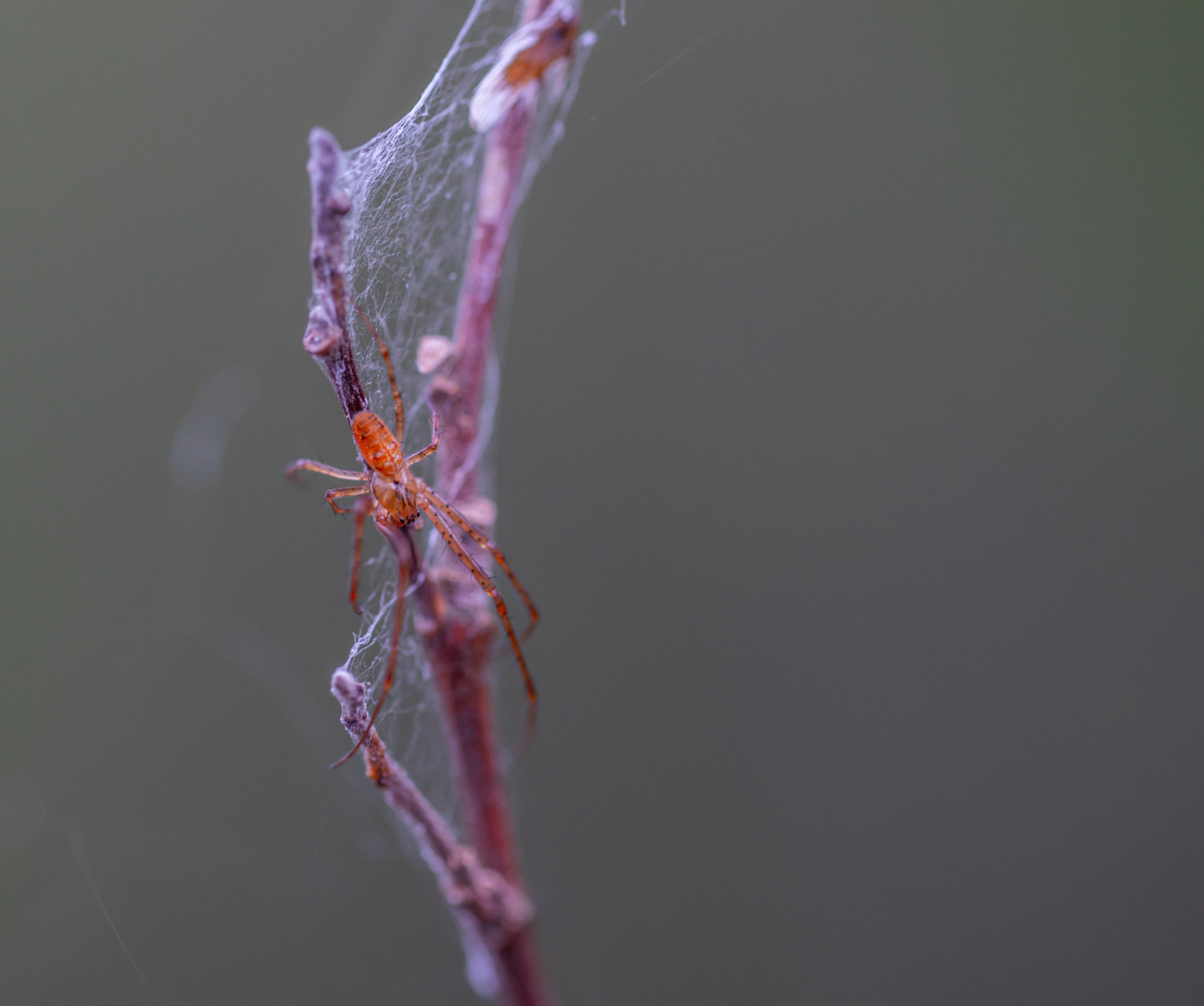 Selective Focus Photography of Brown Spider Perched on Brown Plant Stem