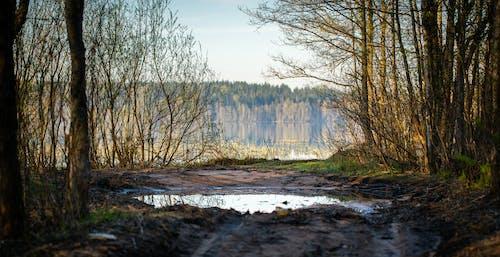 Бесплатное стоковое фото с вода, грязная дорога, грязь, деревья