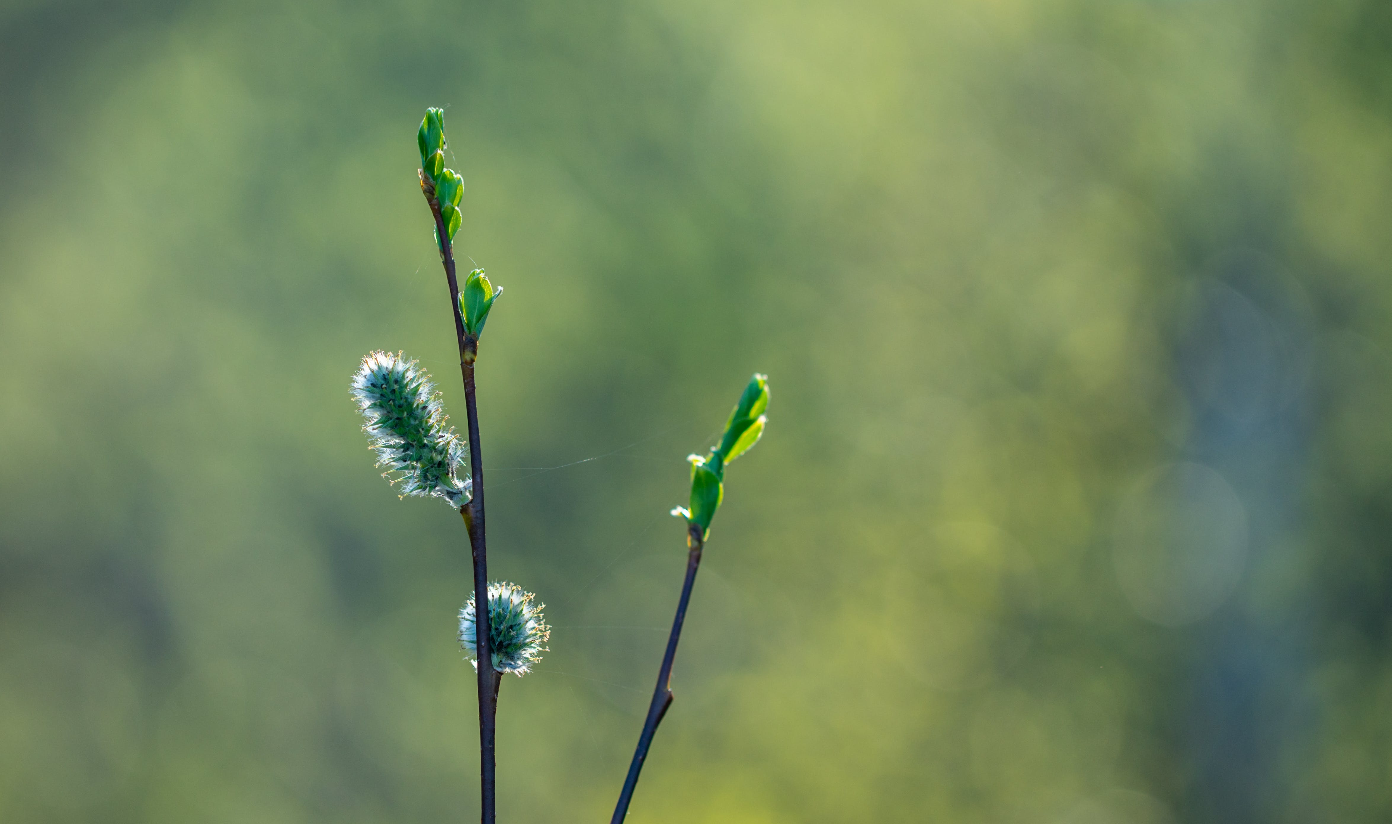 Selective Focus Photo of Green Plant