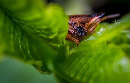 光, 宏觀, 戶外, 昆蟲 的 免费素材照片