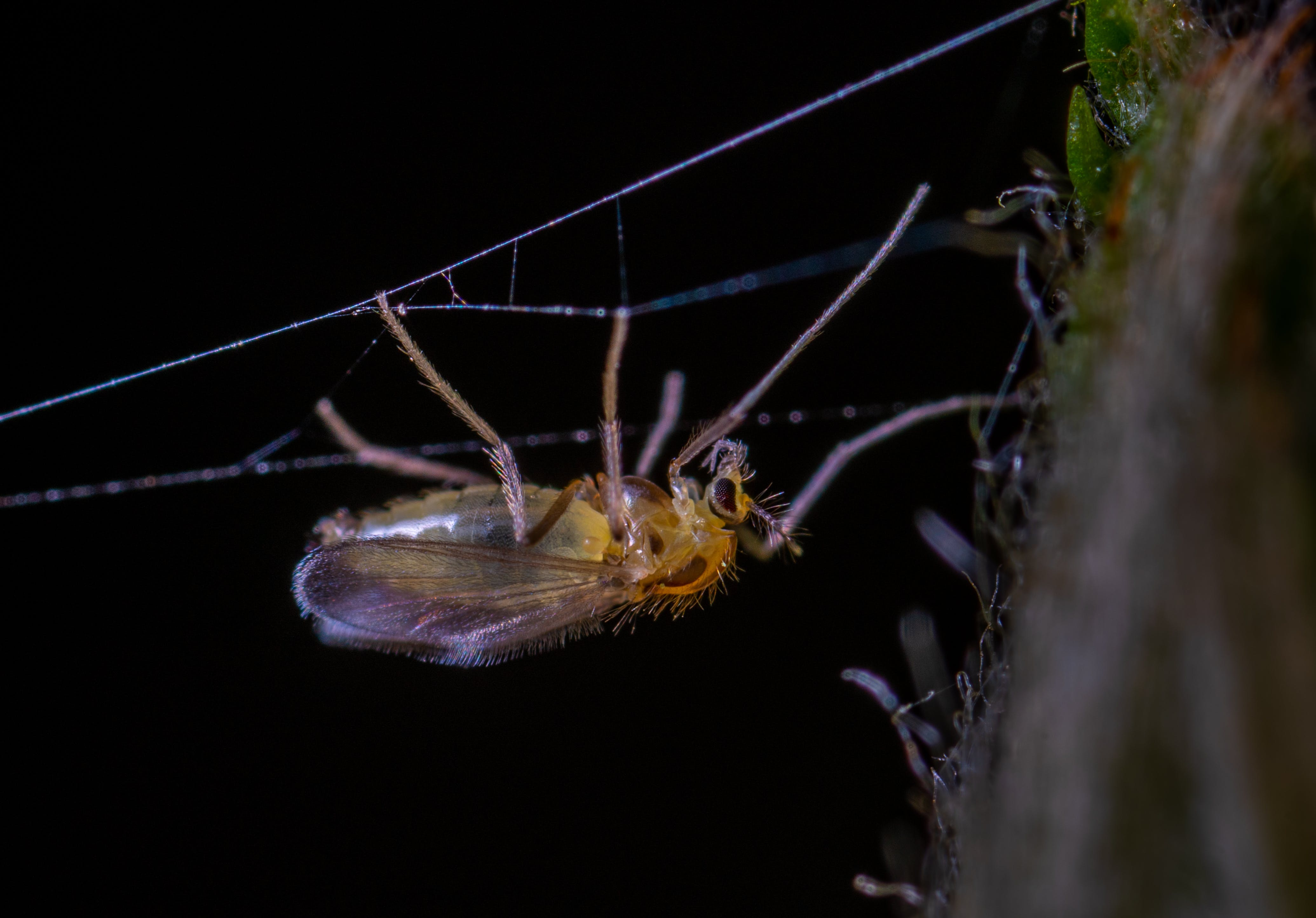 insekt, kuslig, makro