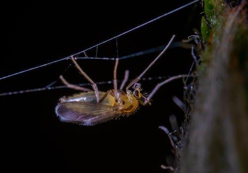 Foto d'estoc gratuïta de aràcnid, aranya, horripilant, insecte