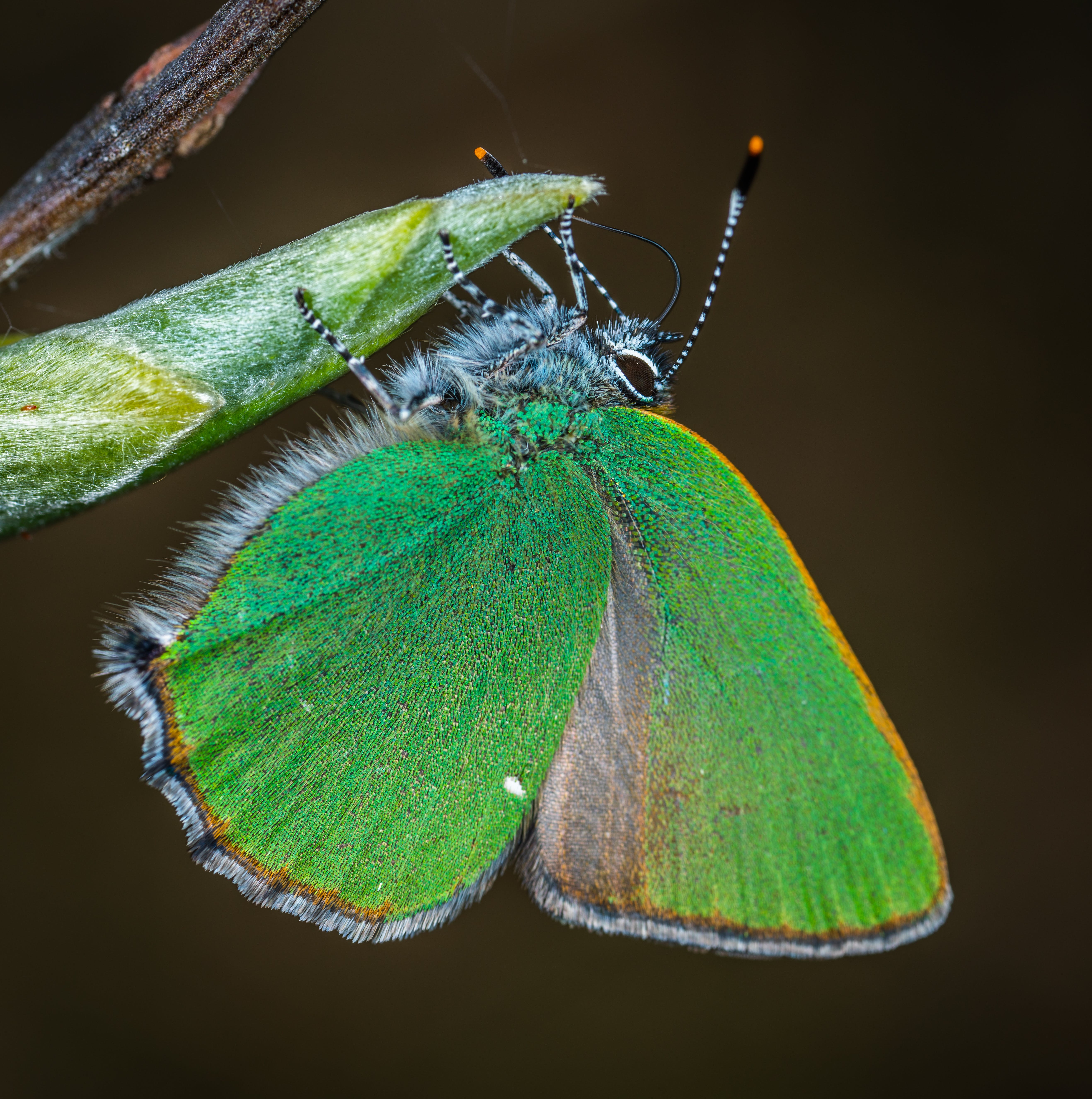 Closeup Photography of Green and Brown Moth Perched on Green Leaf