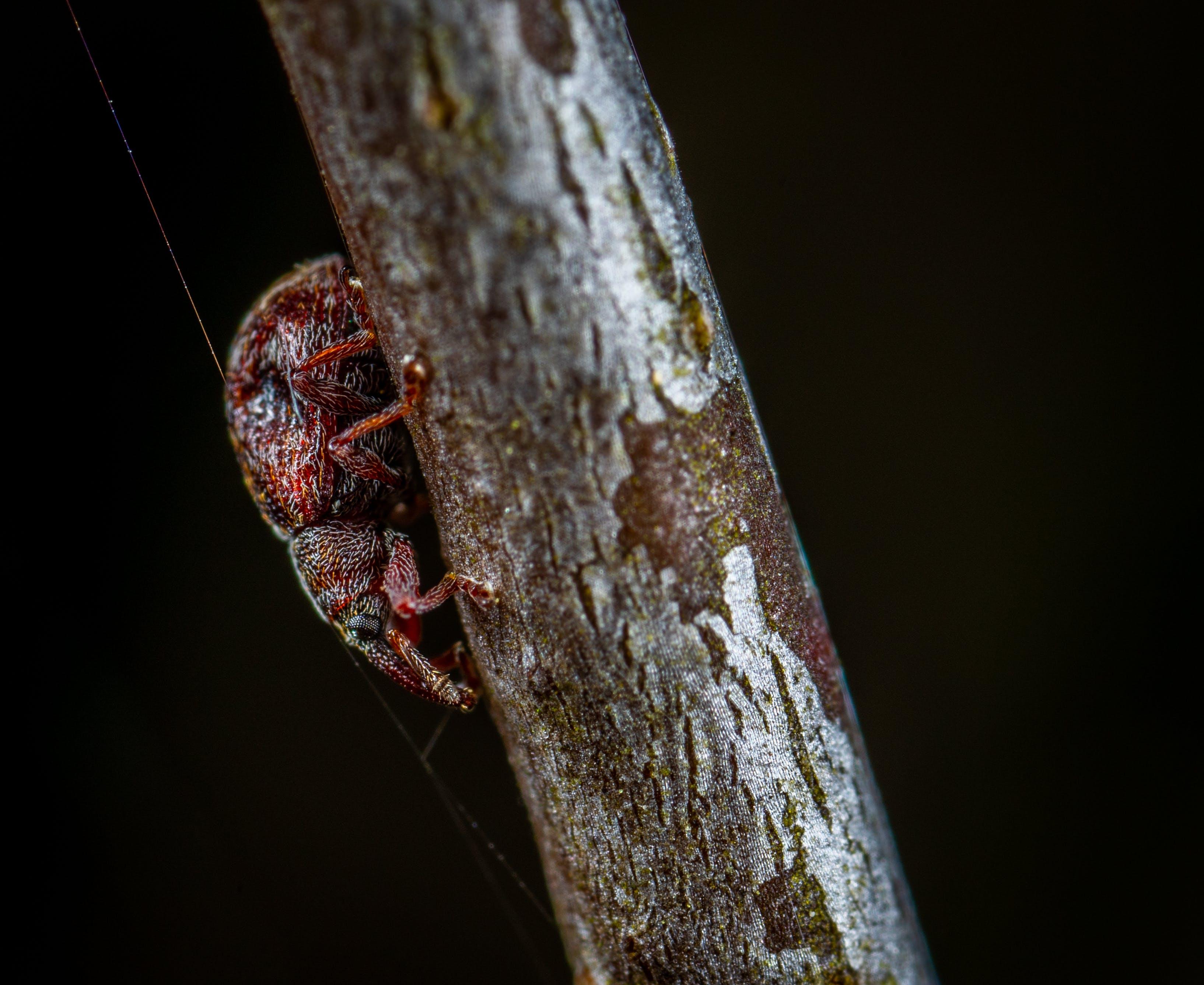 Macro Photo of Red Tree Hopper on Brown Wooden Stem