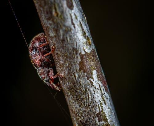 宏觀, 小蟲, 戶外, 無脊椎動物 的 免費圖庫相片