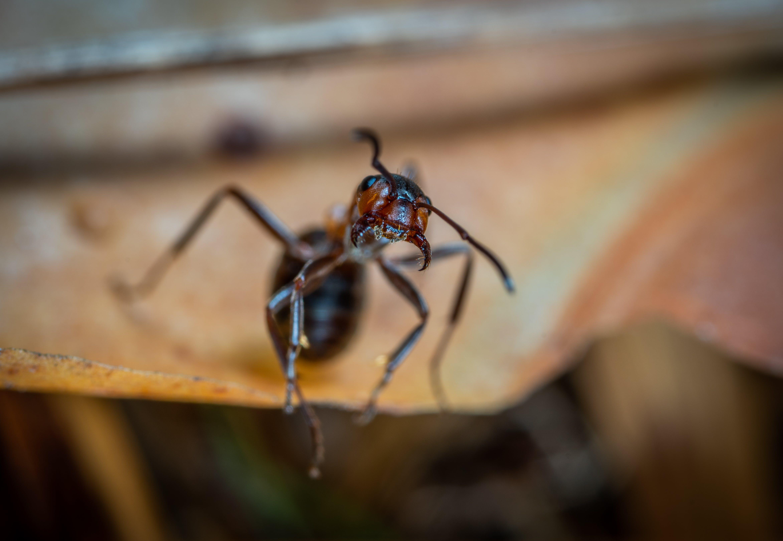 Gratis lagerfoto af dagslys, entomologi, hvirvelløse, insekt