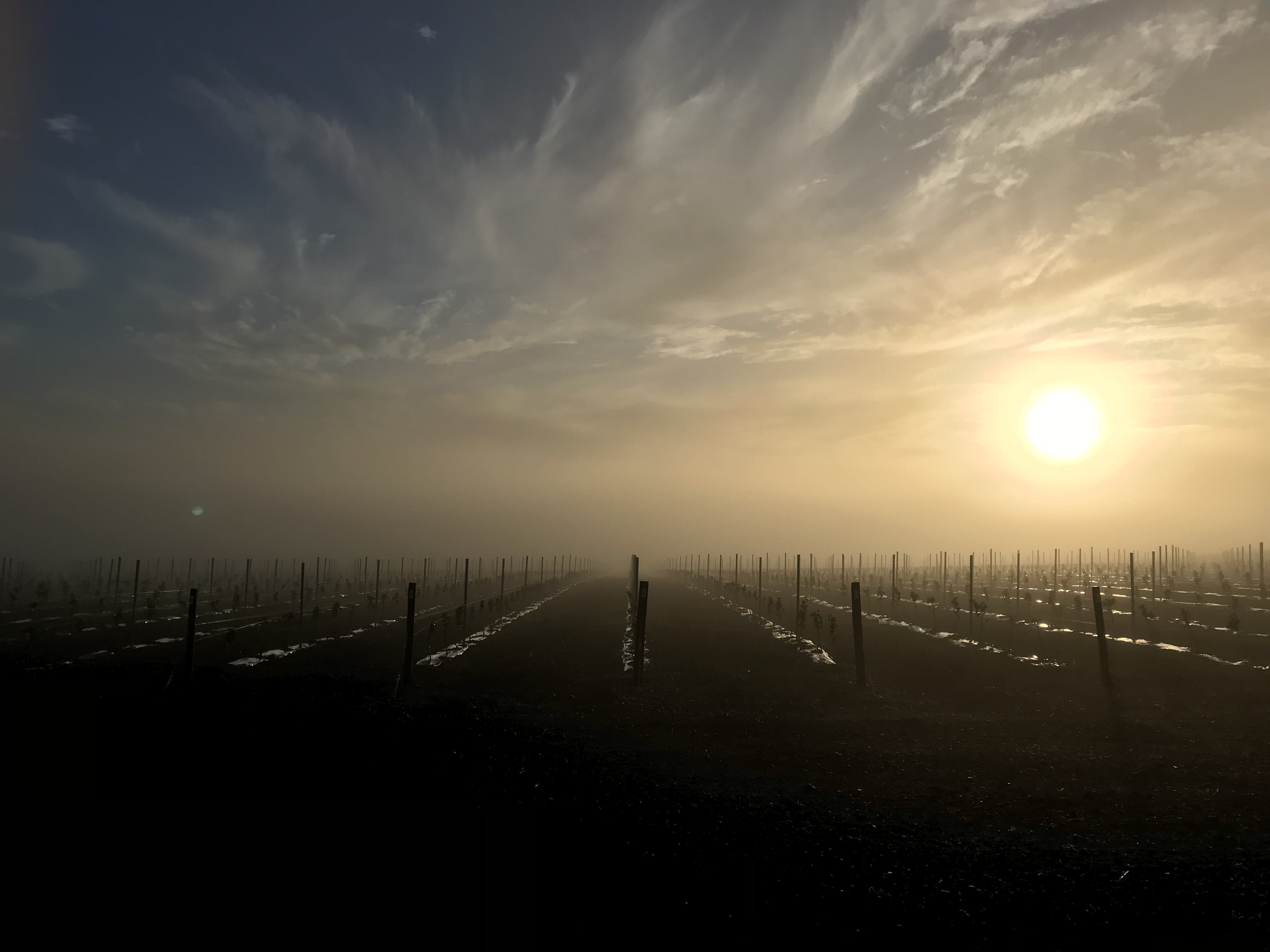 Free stock photo of sunrise, foggy, mist, vineyard