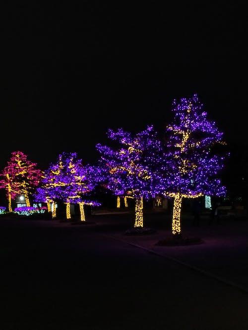 フラワーズ, フラワーライト, ライト, 光の無料の写真素材