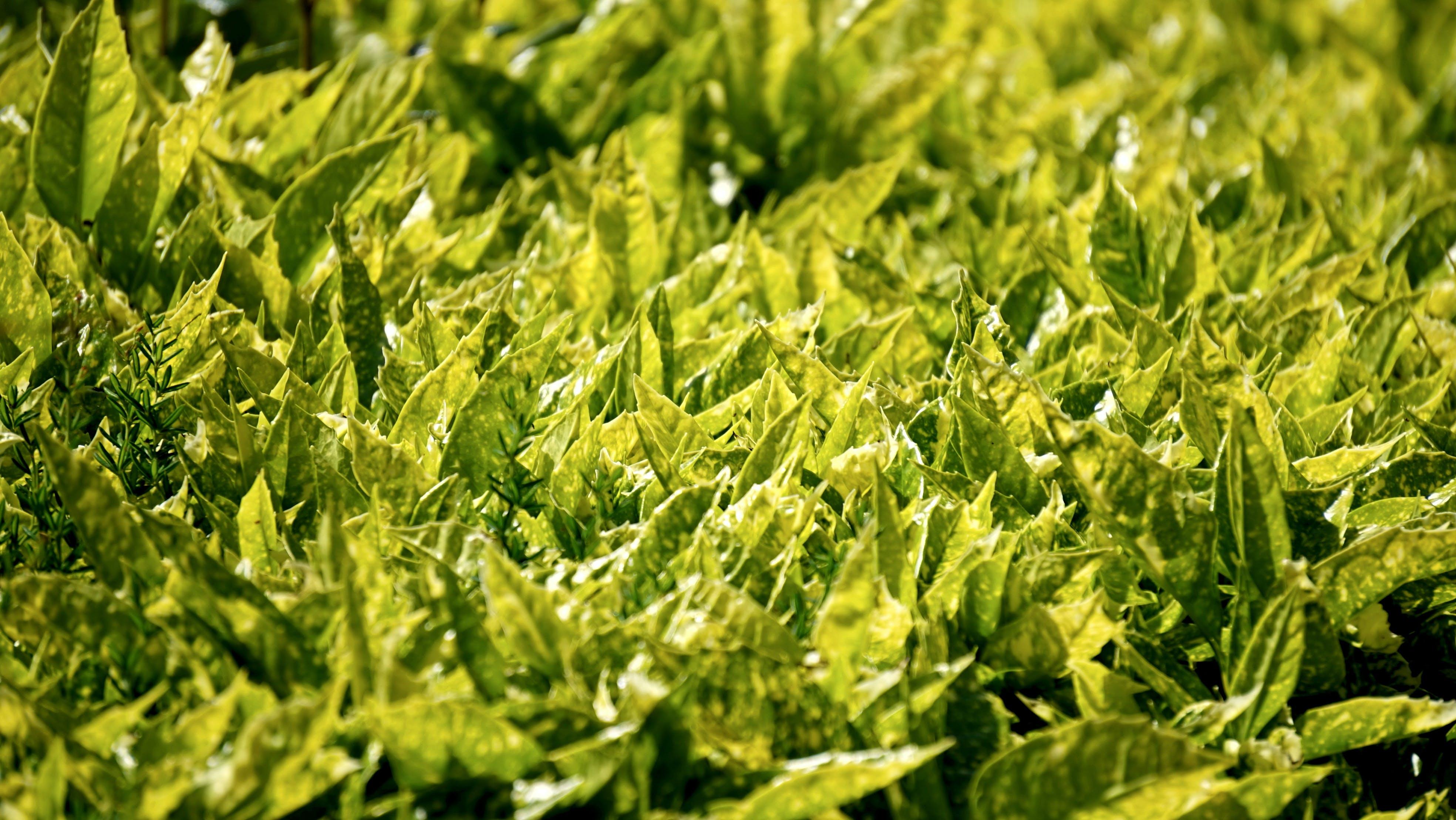 Green Leaf Plant
