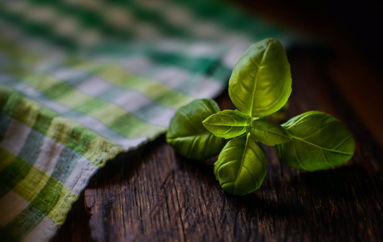 базилик, деревянный, зеленый