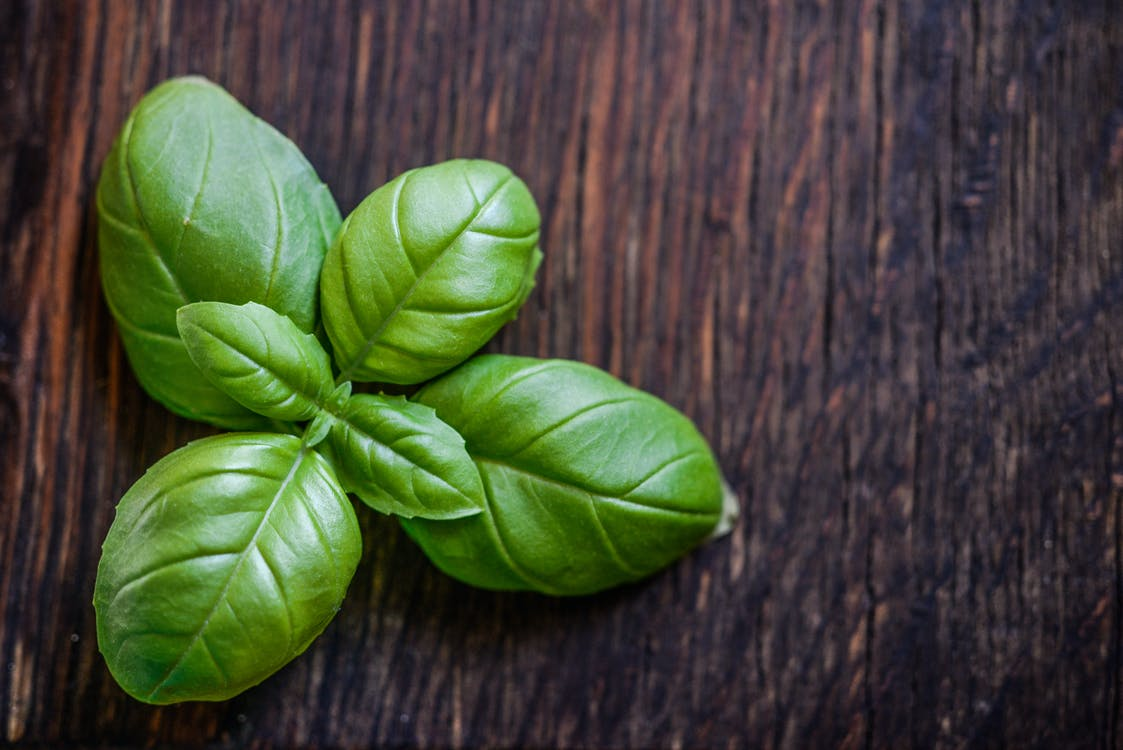 Green Leaf Plant on Brown Wooden Surface