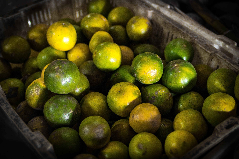 Green Calamansi Fruit