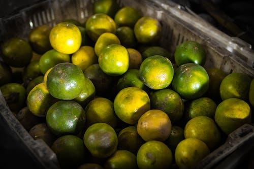 Gratis lagerfoto af calamondin, close-up, container, frugt