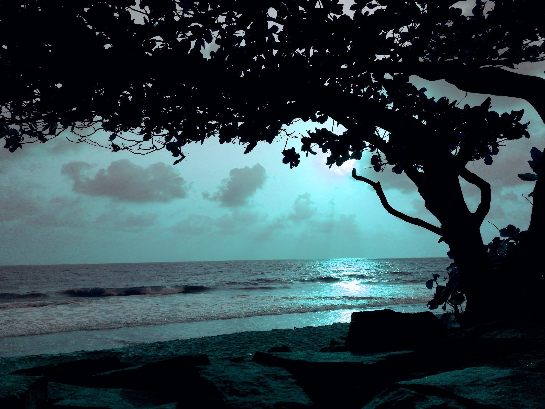 Free stock photo of beachside, midnight, moonlight, phonograph