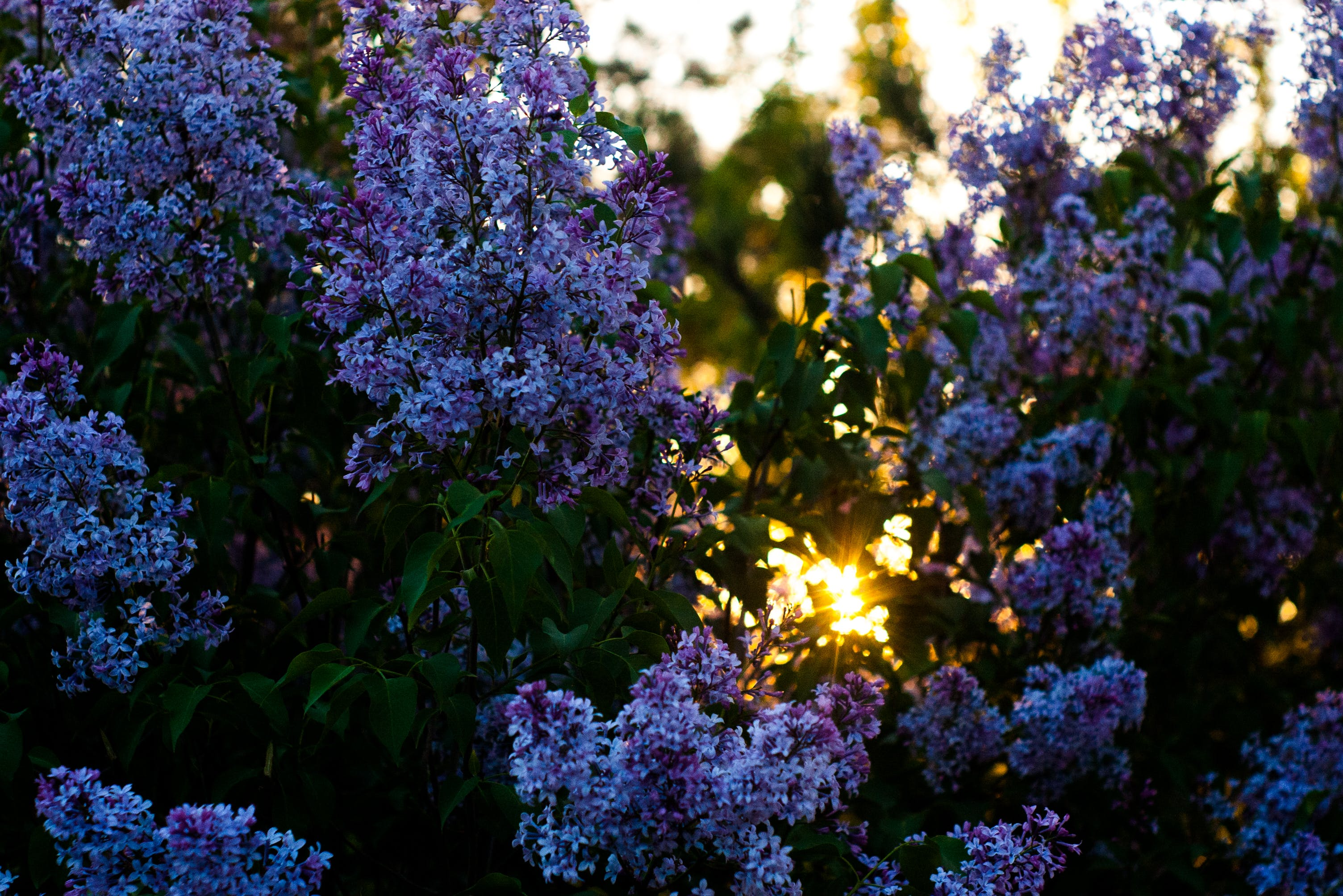 Ilmainen kuvapankkikuva tunnisteilla kasvikunta, kasvu, kaunis, kesä