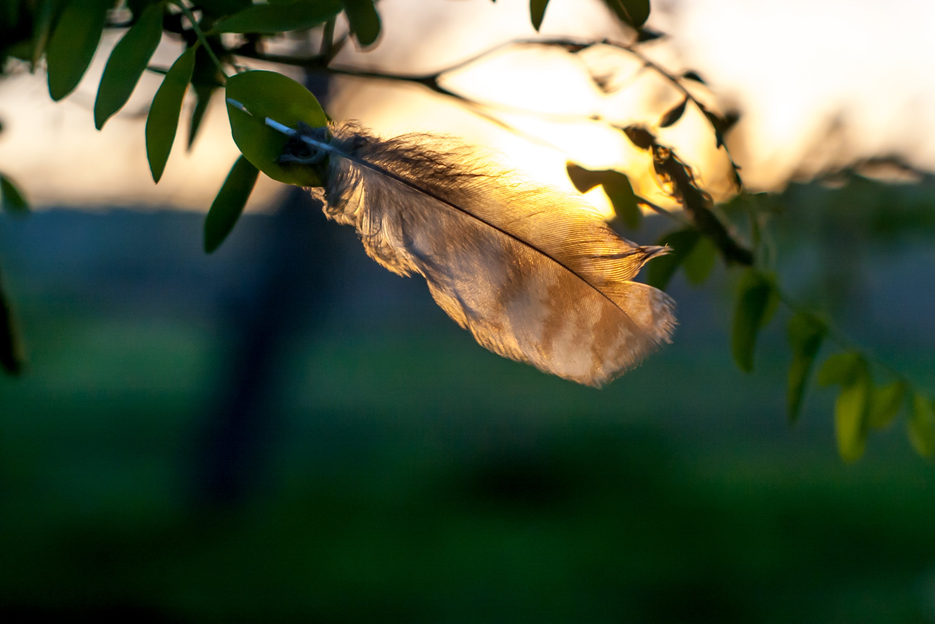 Selective Focus Photography of Brown Feather